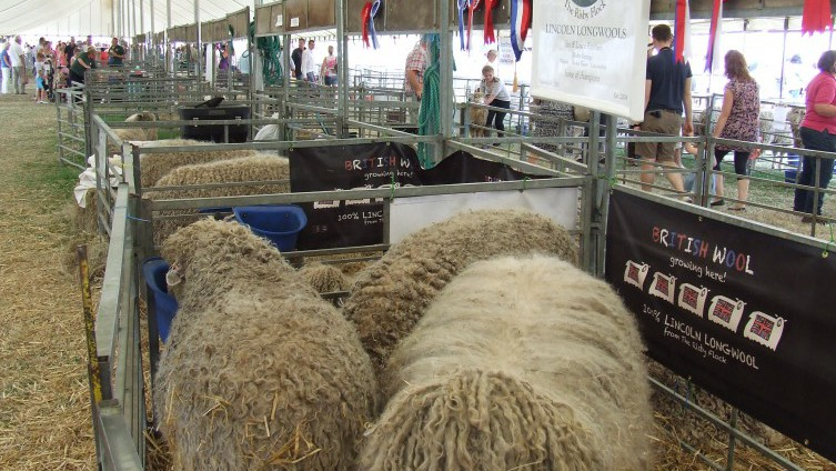 Lincoln Longwool Sheep Sales