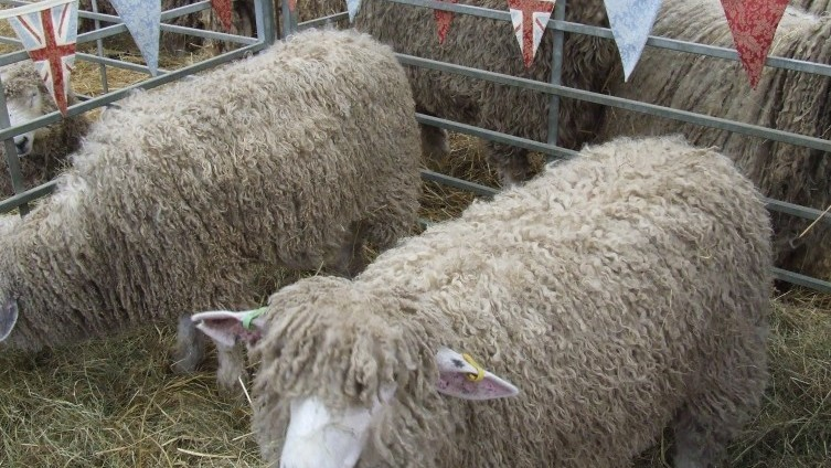 Woolly Jumpers!