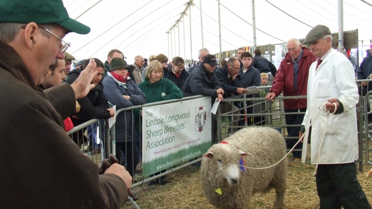 Annual Sale of Lincoln Longwool Sheep