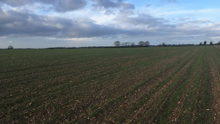 36 Acres of Arable Land Wood Enderby